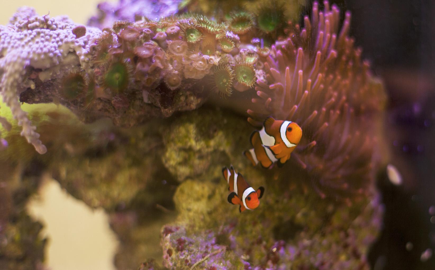 olivari-aquarium